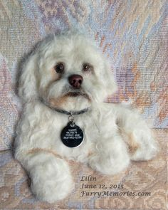 Maltese portrait needle felted with dog's own hair by FurryMemories.com