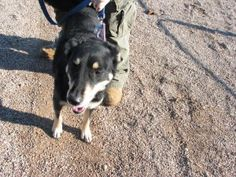 Frankie is an adoptable Husky/Retriever Mix, located in Marion, WI