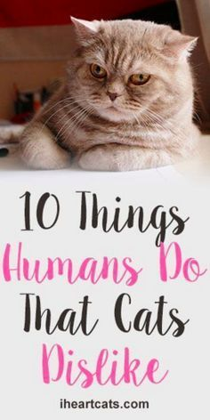 10 Things That Humans Do That Cats Dislike