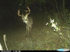 #TipTuesday: How to Score Big with Limited Vacation http://community.deergear.com/the-hunt/how-to-score-big-with-limited-vacation/