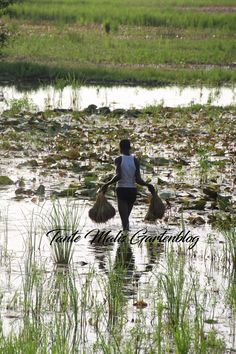 Guinea Bissau Fisher Guinea Bissau, Places To See, Fisher, Mountains, Nature, Travel, Heavens, Travel Advice, Places