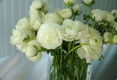 Green & White- my fav, white ranunculus