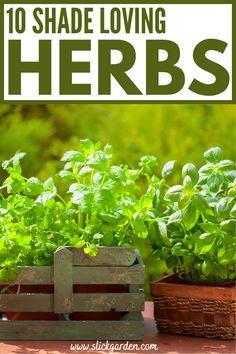 Balcony Herb Gardens, Balcony Plants, Balcony Gardening, Kitchen Gardening, Indoor Gardening, Container Gardening, Growing Herbs Indoors, Growing Plants, Growing Vegetables