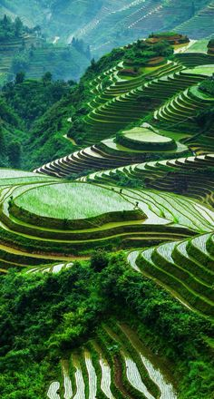 Amazing terraced rice paddy fields