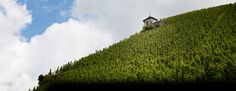 The Berncasteler Doctor vineyard is located behind the village Bernkastel and is one of the most famous vineyards in Germany.