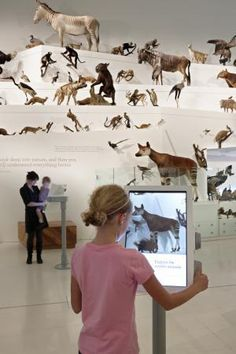 Wild; amazing animals in a changing world by Museum Victoria