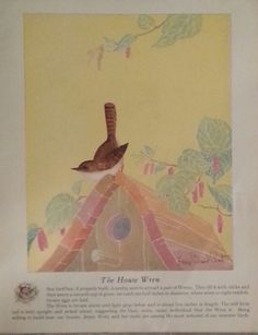 Original Vintage Lithographs The Bobolink & The House Wren by Fern B Peat 1931 by KingCharlesbusiness1 on Etsy