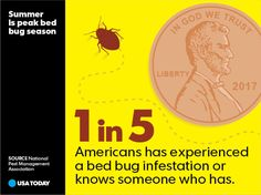 Summer is peak bed bug season. Learn where these pests like to hide before your next vacation. Bed Bugs, Usa Today, Infographic, June 24, Learning, Vacation, News, Summer, Infographics