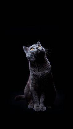 Black Cat 720 X 1280 Wallpapers Disponible Para Su Descarga Gratuita