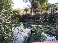 Antique Pool - Cleopatra's Pool #hierápolis #antiquepool #pamukkale #turquia