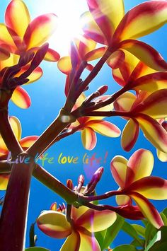 Plumeria Simplicity Photo Random Beauty - Photographer: Atort Photography