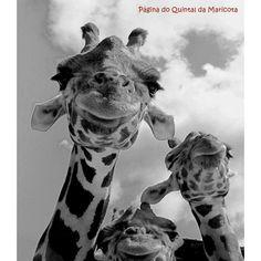 """""""Por que prender a vida em conceitos e normas? /  O Belo e o Feio... O Bom e o Mau... Dor e Prazer... /  Tudo, afinal, são formas /  e não degraus do Ser!""""  [""""Da Perfeição da Vida"""", Mario Quintana]  ... Bom dia!"""