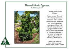Image result for cypress bushes