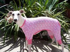 Google Image Result for http://www.nancysdogpawsboutique.com/images/products/Italian%2520greyhound%2520Whippet%2520pajamas%2520022.jpg