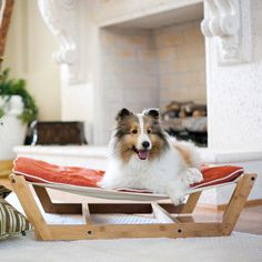 Hammock Medium Orange - our English Setter Allie would totally LOVE this!!!
