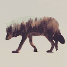beautiful photo series that uses double exposure to combine the beauty of nature with the residing wildlife