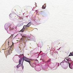 Cherry blossoms (Sakura) Watercolor by Katerina Pytina on Behance #watercolor