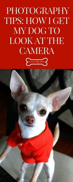 Dog Photography Tips: How to get my dogs to look into the camera - Animals are Better Than People - Pet Photography Tips, Animal Photography, Photography Classes, Photography Camera, Insect Photography, Group Photography, Iphone Photography, People Photography, Wildlife Photography