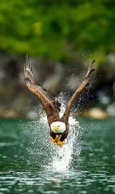 Eagles show Cronus because they are the gods of the sky like Cronus