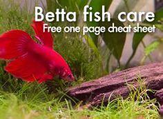 Pet ideas for 5 and 10 gallon aquarium tanks aquarium for Betta fish care sheet