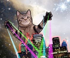 Space Cats (@ItsSpaceCats)   Twitter