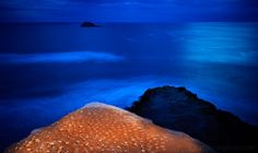 How To Paint with Light in a Landscape