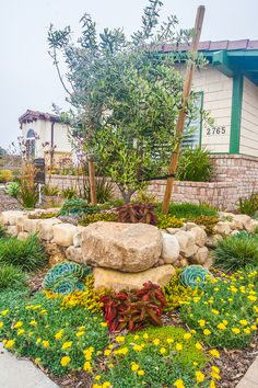 drought tolerant landscaping california | Rhythm and Roots Landscaping