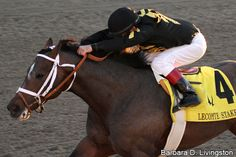 Oxbow owned by Calumet Farm - surprised everybody in the 2013 Preakness!
