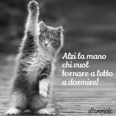 The Feline State has grown too large and powerful. Animals And Pets, Funny Animals, Cute Animals, Good Morning Good Night, Day For Night, Italian Memes, Animal 2, Funny Moments, I Love Cats