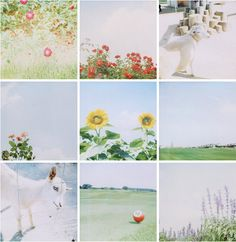 polaroid | Flickr - Photo Sharing!