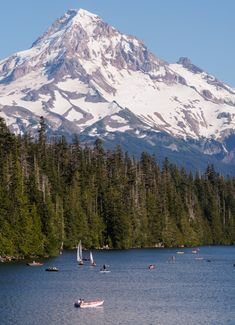 7 Things to Do in Portland Oregon for Twenty Somethings| Always take the scenic route. There are so many places to enjoy beautiful views, like Forest Park, the Williamette River, and so much more.