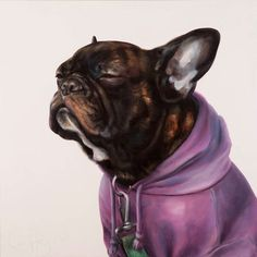Zen Frenchie in a purple hoodie