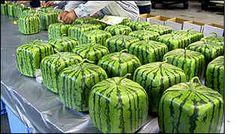 Square fruit stuns Japanese shoppers