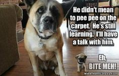 funny dogs - Funny Animals