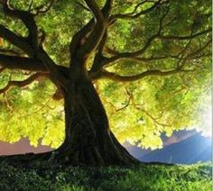 un arbre fort se prêtant à la douce lumière