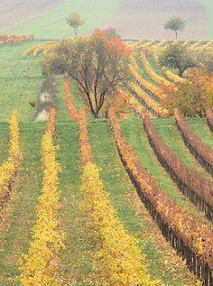 On Austria's Burgenland Wine Region Austria Travel, Swiss Alps, Central Europe, Salzburg, Hiking Trails, Homeland, Travel Ideas, Beautiful Places, National Parks