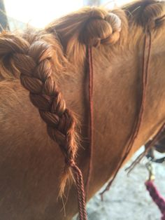 Scalloped neck perfection (Photo via PICSOFYOU.COM) For as long as I have been putting big fluffy dutch braids into Guinness' mane, pe...