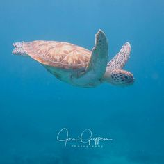 Sea Turtle Jon Geypen