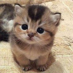 .Adorable Kitten! More
