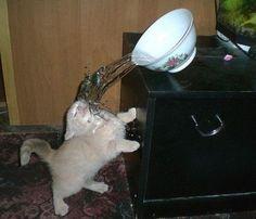 FAIL kitty has failed