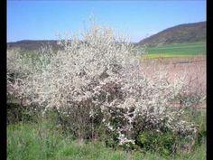 Az erdő növény és állatvilága Cserjék Botany, Montessori, Homeschool, Science, Plants, Outdoor, Outdoors, Flag, Planters