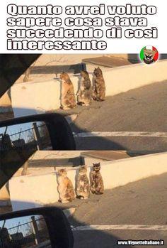 - Gatti interessati