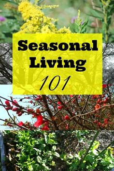 Tired of waiting for spring? Here are some old-fashioned strategies for embracing each season by practiving seasonal living | areturntosimplicity.com
