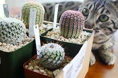 Resultados de la Búsqueda de imágenes de Google de http://www.plantpropaganda.com/wp-content/uploads/2013/06/PP-Cat-And-Cactus-Haul.jpg