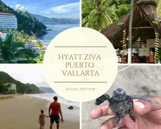 Meet Miguel the resident zoologist and learn all about the Green Turtles of the Tortugario on Estacas Beach at the Hyatt Ziva in Puerto Vallarta, Mexico. Puerto Vallarta, How Is Tequila Made, Cute Baby Turtles, Turtle Nursery, Hotels For Kids, Church Of Our Lady, Mexico Resorts, Inclusive Resorts, Beach Look