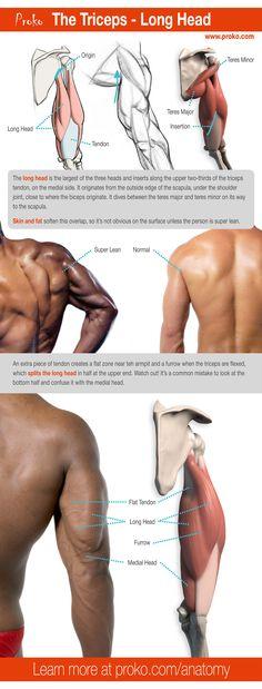 84 Best Anatomymusclesreference Images On Pinterest Anatomy