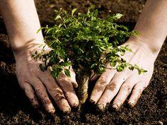 plant trees :))