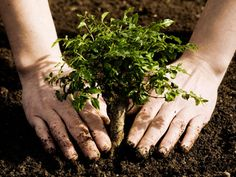 plant trees, save planet