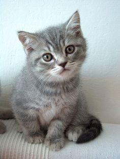(=^_^=)   #neko #cat