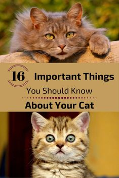 If you notice awkward behavior on your cat, you should know that it's trying to tell you something important. Here are a few things that your cat wishes you understood. 1. Do not disturb Image Cred…